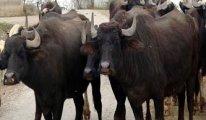Türkiye'de sulak arazilerin azaldığının göstergesi, Sayısı 1 Milyondan 100 bine indi