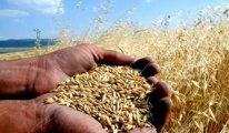 Türkiye Buğday ithalatında dünya rekoru kırdı