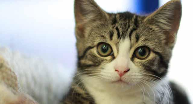 Kediler dünyaya Anadolu'dan yayılmış