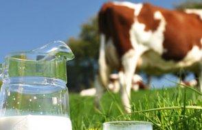 Yem fiyatları dövizle uçtu, süt üreticisi litre başına büyük zam istiyor