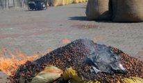 Fındık üreticisi bu yıl neden ürününü yaktı?