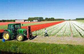 Konya büyüklüğündeki Hollanda'dan 100 milyar euro'luk tarım ihracatı