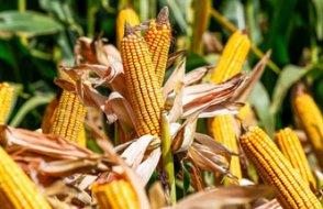 Temel gıda maddesi ithalinde resmen patlama yaşandı