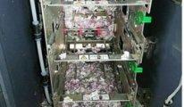ATM'ye giren fareler içerideki tüm parayı yedi!