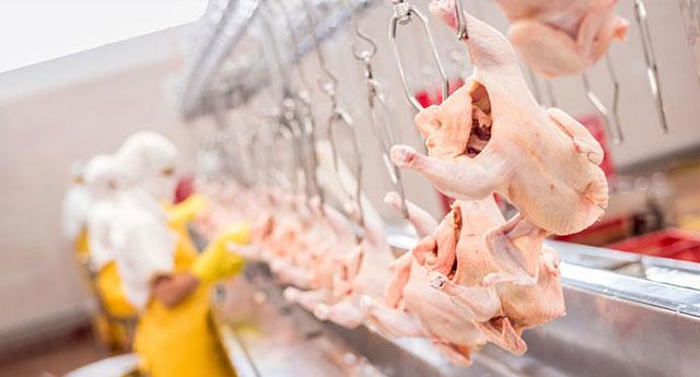 Vatandaş tavuk bile alamıyor: Üreticiye göre kuş gribi dönemi bile bu kadar kötü değildi