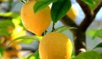 Bize sunulan en güzel hediye: Limon