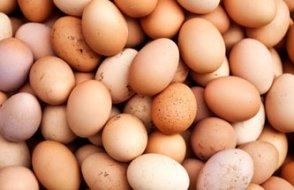 Yumurtada kriz büyüyor! 17 milyon tavuk kesildi, 1 milyonu telef edildi