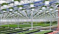 Yüzölçümü Konya'dan küçük Hollanda dünyanın en büyük 2. tarım ihracatçısı