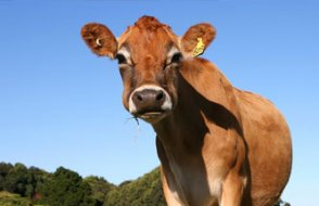 Türkiye'de kırmızı et üretimi patladı... Sebebi ise hiç düşündüğünüz gibi değil!