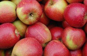 İğneli meyve sabotajı yayılıyor