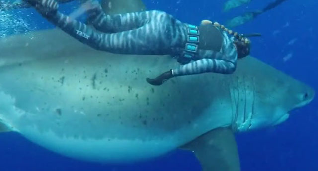 Dikkat, görüntü fotoşop değildir! 6 metrelik köpekbalığı şöyle bir uğrayıp gitti