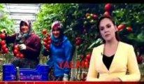 Üretici diye AKP yöneticisini konuşturmuşlar