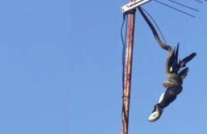 3 metrelik yılan kuşu havada yakaladı!