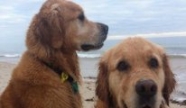 Köpeklerini vegan olarak yetiştiren kadın: İki köpeğim de sağlıklı ve mutlu