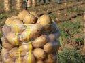 Bedava dağıtım, patates fiyatını patlattı
