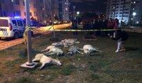 Ankara'daki katliamda ölen köpek sayısı 16'ya çıktı