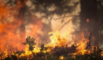 İstanbul Emirgan'da yangın: Yayılmadan söndürüldü