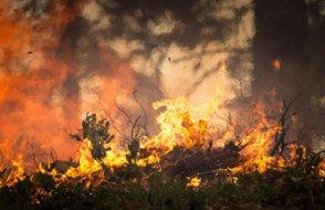Türkiye'deki orman yangınları Guardian'da: 'Hükümete öfke büyüyor'