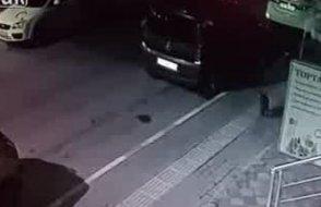 7 sokak köpeğine kafa tutan kedi