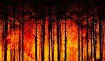 Orman yangınlarını önleyebilecek sprey üretildi
