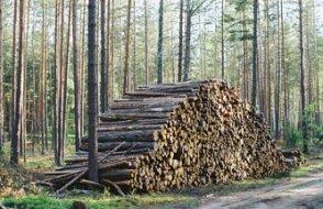 Dünya ormanlarıyla ilgili ürküten tablo