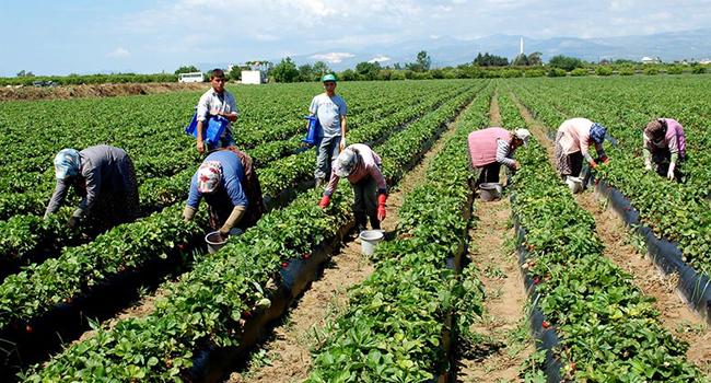 Gıda el yaktı: Tarım ürünleri  enflasyonu yüzde 30!