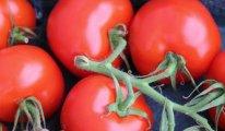 Rusya'dan Türkiye ile ilgili yeni domates kotası kararı