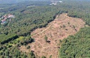 Ormanlar devlet eliyle yok oluyor!