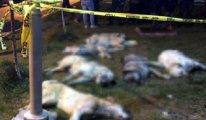 Ankara'da köpekleri zehirleyen 3 sanık için 'ağır ceza' kararı