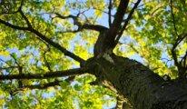 İtalya'da 'Her İtalyan İçin Bir Ağaç' kampanyası