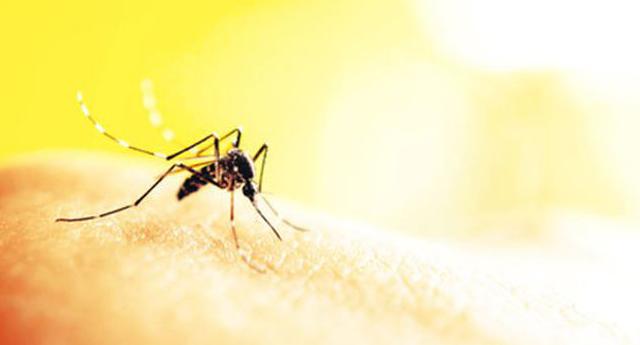Sivrisinekler bazı kişileri neden daha fazla ısırır?