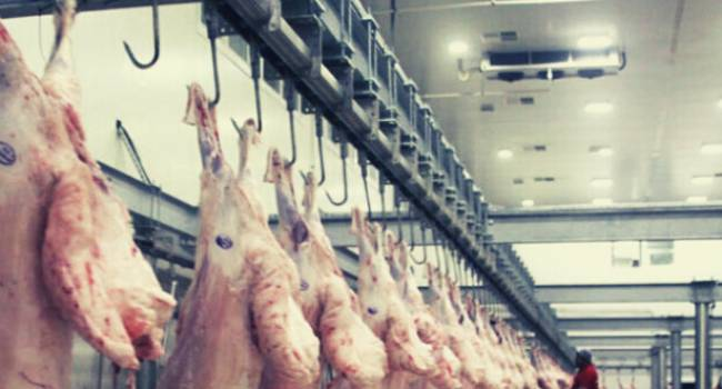 Mezbaha ve hayvan pazarı kapatıldı