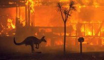 Yangın Avustralya'daki ormanların beşte birini yok etti
