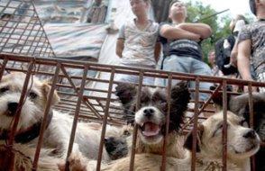 Çin'de ilk kedi köpek eti yasağı geldi