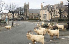 İnsanlar karantinada, hayvanlar sokaklarda!