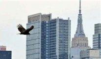 Akbabalar New York semalarında...