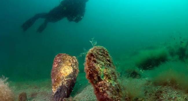 Akdeniz sularında parazit tehdidi