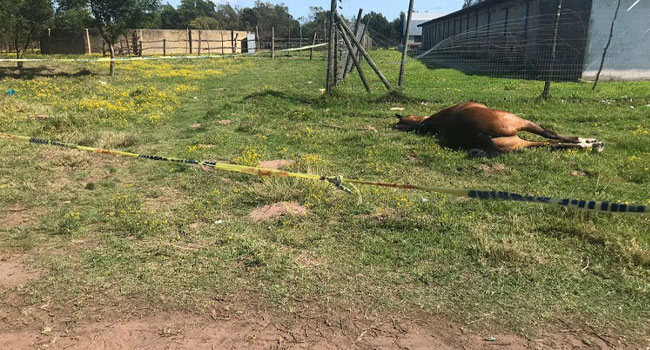 Atlara palalarla saldırdılar