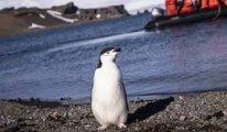 Ölü bulunan penguenin midesinden bakın ne çıktı