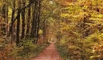 İklim değişimi, yaprakların dökülme zamanını etkiliyor