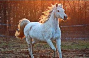 MHP'li belediyeye hibe edilen atlar kayboldu, soruşturma başlatıldı