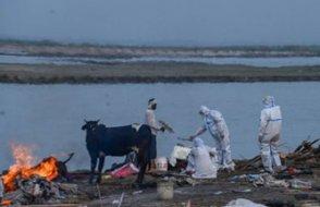 COVID-19 dehşeti! Ganj Nehri'ne bırakılan cesetleri toplamak için ağ çekildi