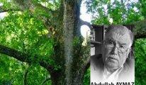 [ Abdullah Aymaz ] Saksıya Çınar Ağacı dikilmez