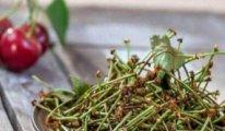 Fazla kiraz sapı çayı karaciğer yetmezliğine yol açıyor
