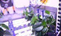 Uzay tarımında yeni gelişme