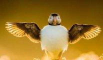 İşte 2021'in en iyi kuş fotoğrafları