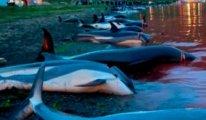 Danimarka'nın Faroe Adaları'nda binlerce yunus katledildi