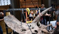 66 milyon yıllık dinozor iskeletine 6,6 milyon Euro