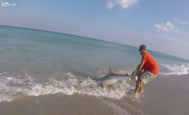 Kıyıya vuran köpekbalığını kurtardı