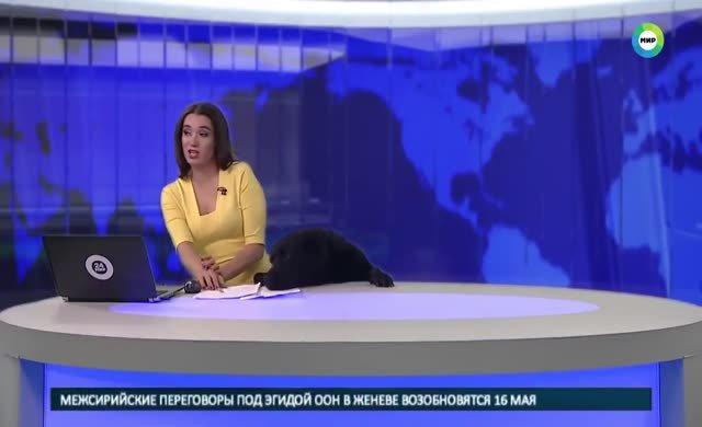 Masanın altından köpek çıktı, Rus spiker ne yapacağını şaşırdı